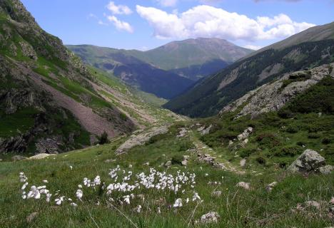 Rutes temàtiques: Herbes, remeis i bolets